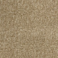 Shop STAINMASTER PetProtect Magnetic Storm Carpet Sample ...