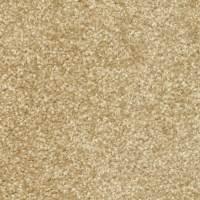 Shop STAINMASTER PetProtect Day Trip Rejuvinate Carpet