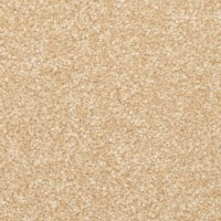 Shop STAINMASTER PetProtect Excursion Palmetto Carpet ...