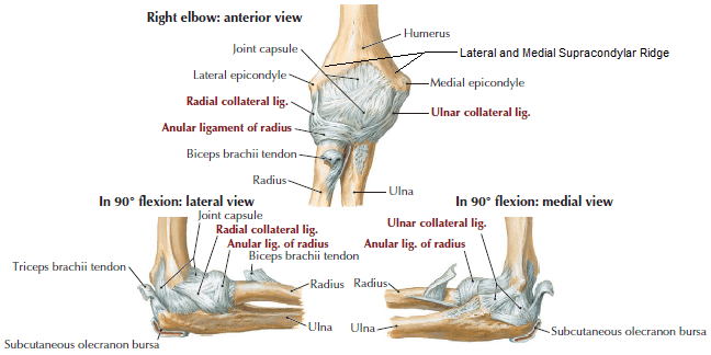 Elbow joint - Mobile Physiotherapy Clinic Ahmedabad Gujarat
