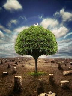Download Tree Mobile Wallpaper  Mobile Toones