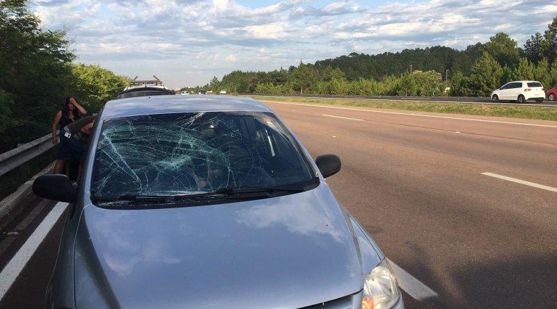 Atropelamento Freeway Gravataí