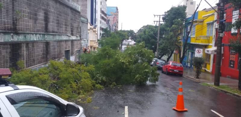 Árvore João Pessoa