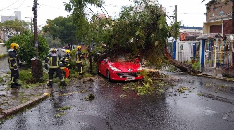 Queda de árvore Carro