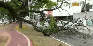 Galho de árvore Avenida Sumaré