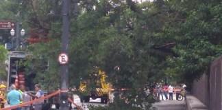 Árvore Rua Maria Paula