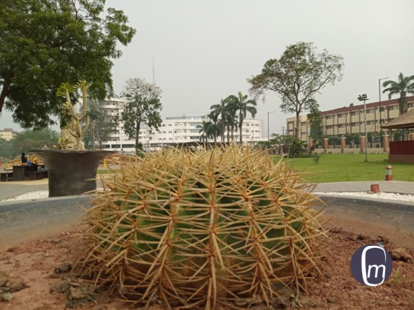 soda s2 review cactus plant jjt park