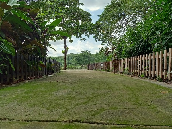 oppo f11 pro 48 mp camera agodi garden ibadan walkway animal eye view