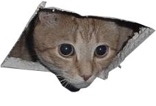 spykitty1a