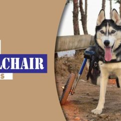 Wheelchair Dog White Chair Covers For Metal Folding Chairs 7 Best Wheelchairs 2019 Revealed By Mobility Pedia