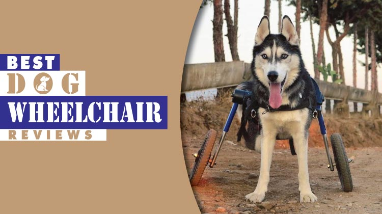 wheel chairs for dogs hanging chair amart 7 best dog wheelchairs 2019 revealed by mobility pedia
