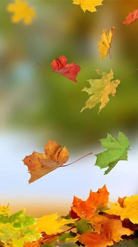 Falling Leaves Hd Live Wallpaper Apk Autumn By Ultimate Live Wallpapers Pro Para Android Baixar