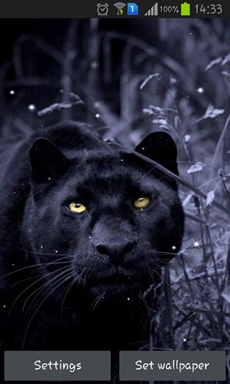 Jaguar 3d Wallpaper Black Panther Para Android Baixar Gr 225 Tis O Papel De