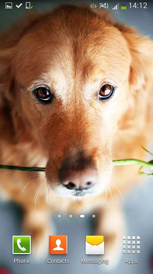 Download 3d Rose Live Wallpaper Full Version Cute Dogs Live Wallpaper For Android Cute Dogs Free