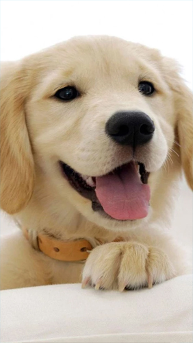 Cute Pet Animals Wallpapers Puppies Live Wallpaper For Android Puppies Free Download