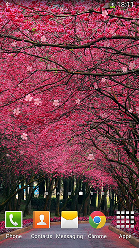 Sakura Falling Live Wallpaper Apk Full Sakura By Orchid Live Wallpaper For Android Sakura By