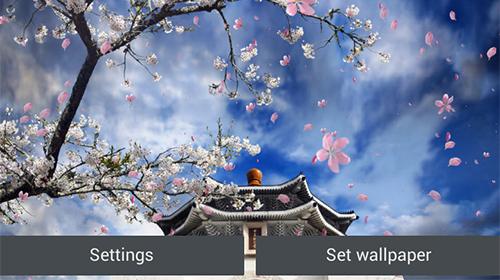 Sakura Falling Live Wallpaper Apk Full Sakura Garden Live Wallpaper For Android Sakura Garden