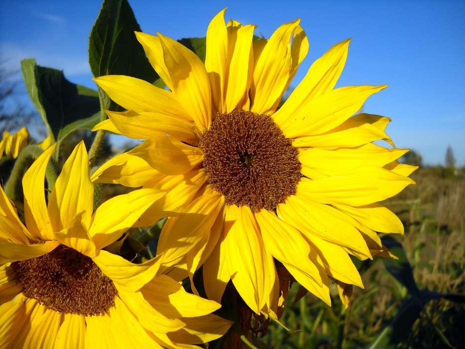 Download Bilder fr das Handy Pflanzen Blumen