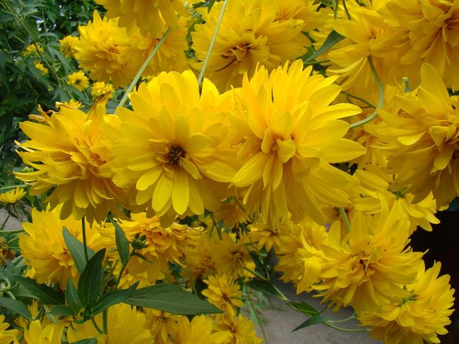 Download Bilder fr das Handy Pflanzen Blumen kostenlos