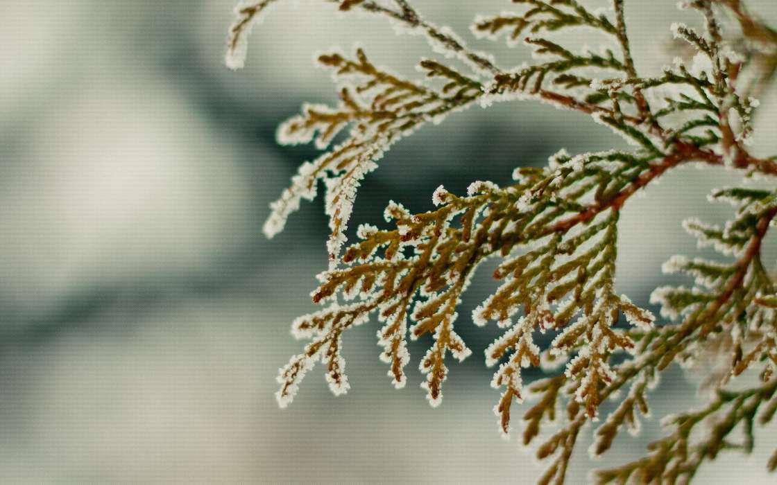 Download Bilder fr das Handy Pflanzen Hintergrund