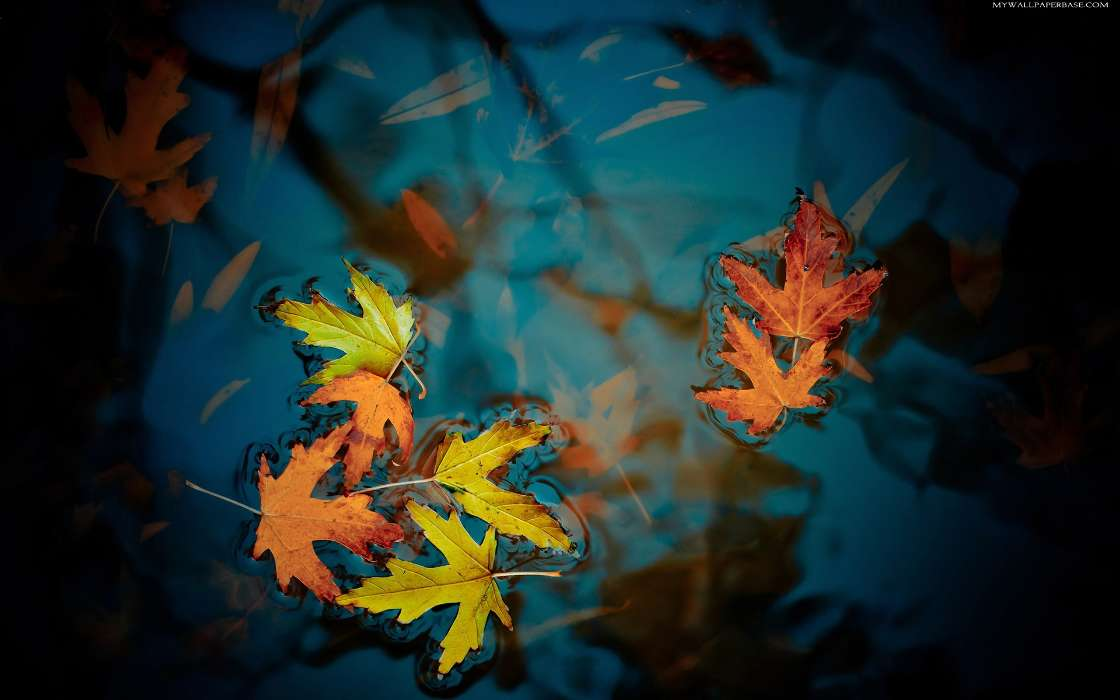 Falling Leaves Wallpaper For Iphone Descargar La Imagen En Tel 233 Fono Plantas Agua Oto 241 O
