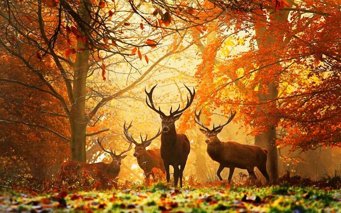 Download Bilder fr das Handy Tiere Herbst Wild