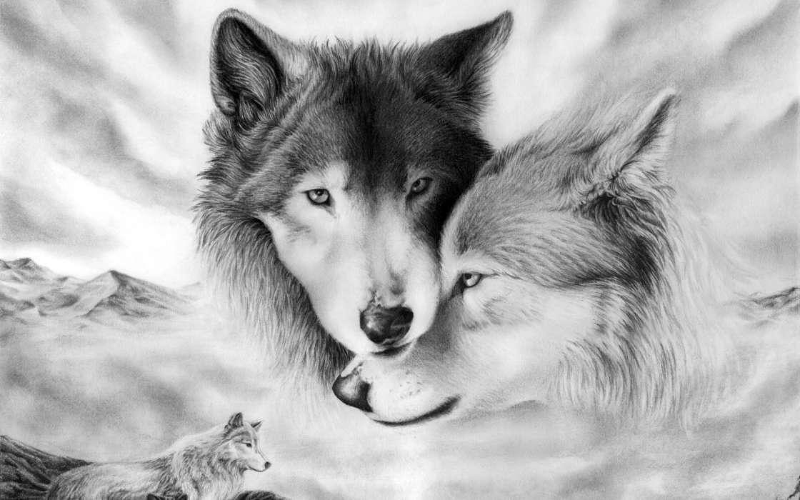 Download Bilder fr das Handy Tiere Wlfe Bilder