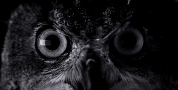iPhone 7 w pierwszej reklamie wideo