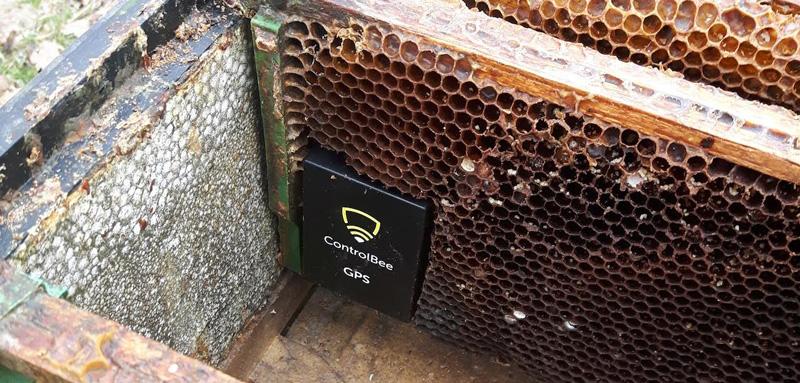 Czujnik ControlBee zamontowany w ulu