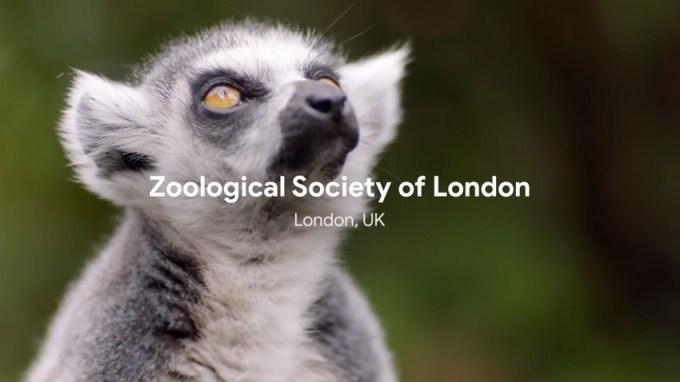 Londyńskie Towarzystwo Zoologiczne wykorzystuje Google Cloud do ochrony zagrożonych gatunków zwierząt