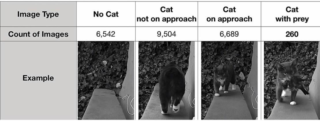 Liczba zdjęć z różnymi sytuacjami z kotem Metriciem załadowane do AI