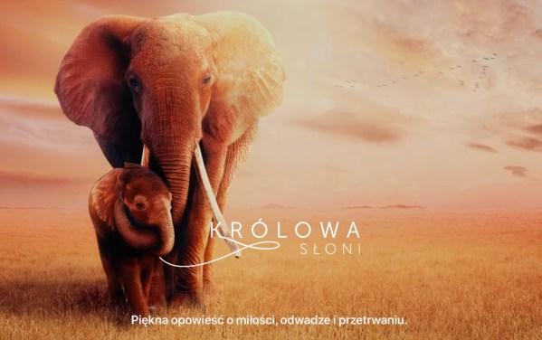 """Obejrzyj zwiastun filmu """"Królowa słoni"""""""