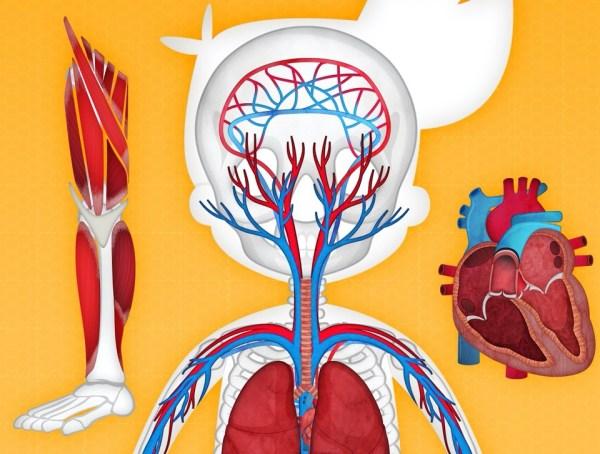 Z tą aplikacją Twoje dziecko dowie się, jak działa ludzkie ciało?