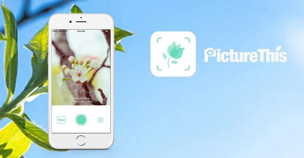 Aplikacja mobilna do rozpoznawania i pielęgnacji roślin PictureThis - Plant Identifier
