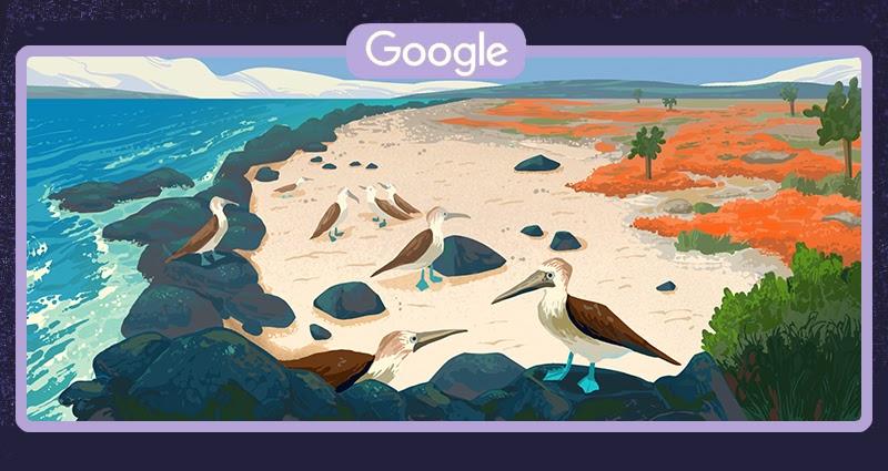 Głuptak niebieskonogi na Wyspach Galápagos