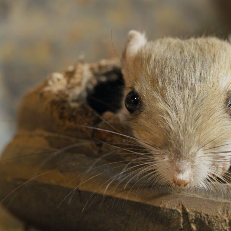 Szczuroskoczek w bucie - kadr z serialu Maleńkie stworzenia
