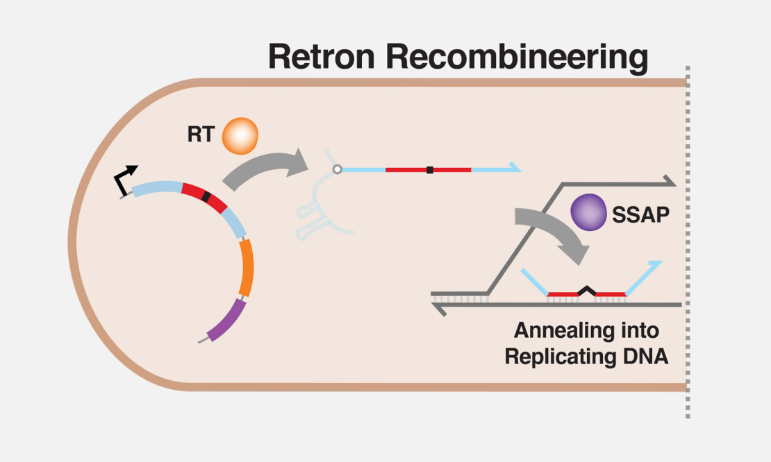 Retron Library Recombineering (RLR)
