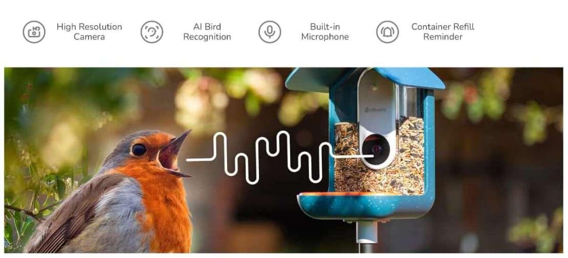 Rozpoznawanie ptaków po śpiewie i wyglądzie przez karmnik Bird Buddy