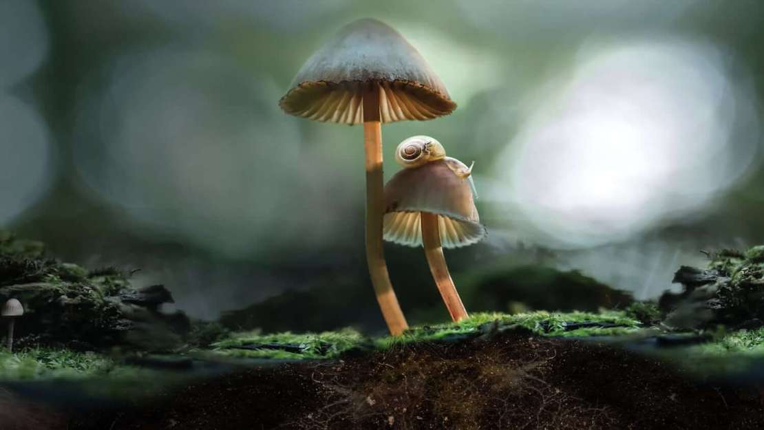 """Film dokumentalny """"Niezwykły świat grzybów"""" (""""Fantastic fungi"""")"""