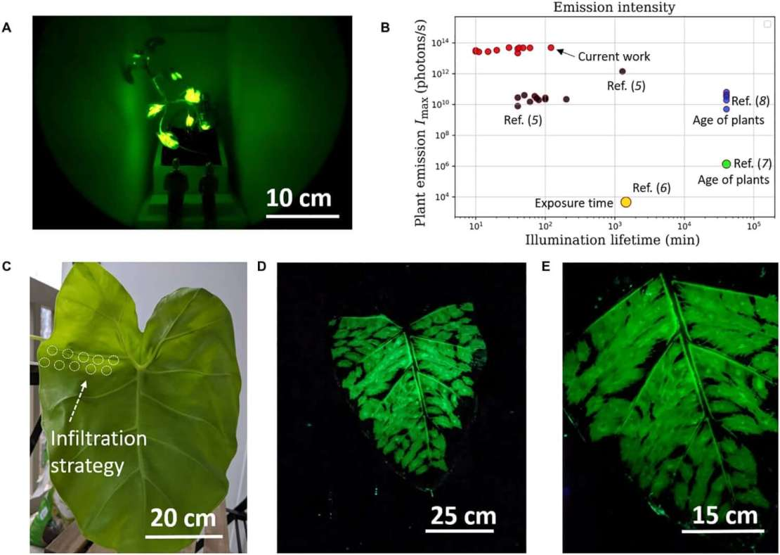 Przykłady świecących roślin