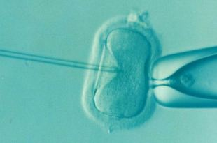 The discovery could open a new era in fertilization treatments