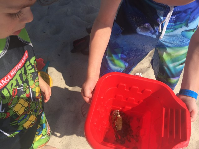 We caught a crab -- and let him go