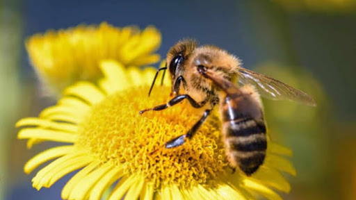¿Cómo se alimentará el mundo cuando las abejas hayan muerto?