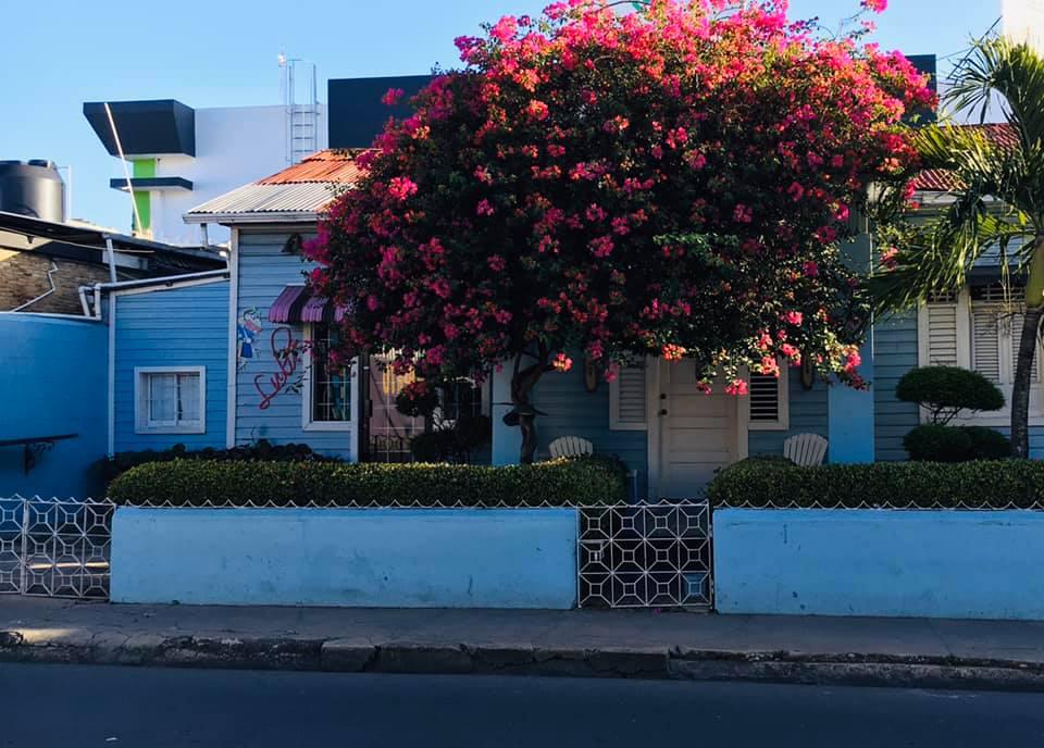 Musiquito, Gala de música mocana