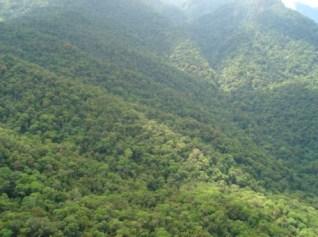 Bosque Primario en el PN Pico Bonito