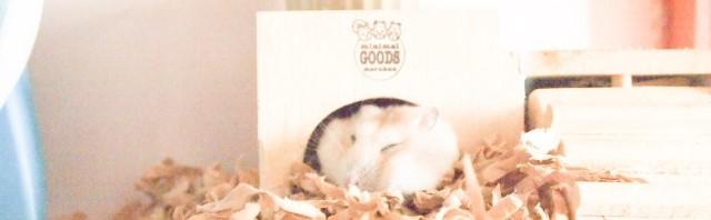 寝ているハムスターの画像
