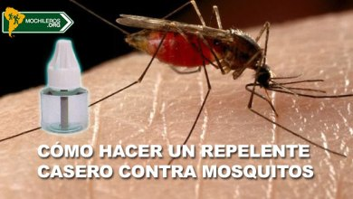 Photo of Cómo hacer un repelente de mosquitos casero