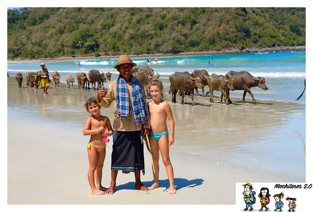 bufalos playa indonesia