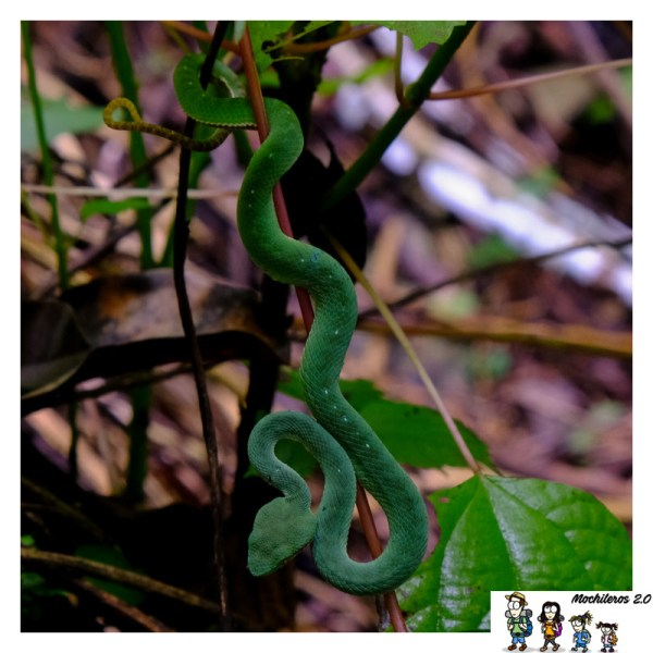 serpiente cataratas kuang si