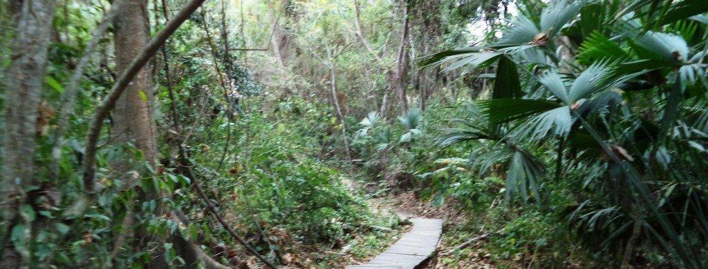 Parque-Nacional-Tayrona-Colombia-Sendero-del-Conocimiento